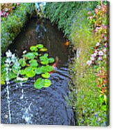 Koi Fountain Acrylic Print