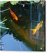 Koi - Oil Painting Effect Acrylic Print