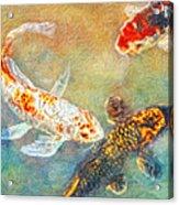 Koi Acrylic Print by Robert Jensen