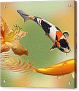 Koi With Azalea Ripples Dreamscape Acrylic Print