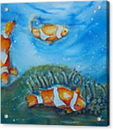 Koi's On The Reef Acrylic Print