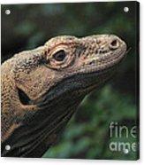 Komodo-7399 Acrylic Print