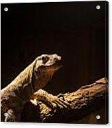 Komodo Dragon Poising Acrylic Print
