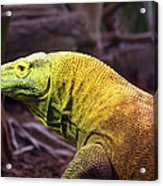 Komodo Dragon Acrylic Print