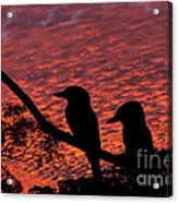 Kookaburras At Sunset Acrylic Print