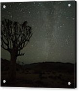 Kookerboom Tree With Milky Way Acrylic Print