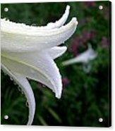 Korean Lily Acrylic Print