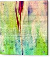 L Epi - S14at01 Acrylic Print