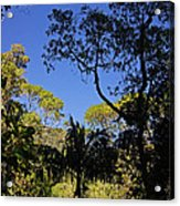jungle in La Amistad National Park Panama 1 Acrylic Print