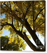 La Boca Ranch Cottonwood Acrylic Print