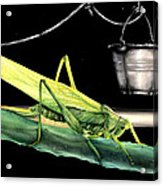 La Locusta E Il Secchio Acrylic Print