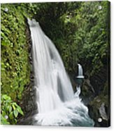 La Paz Waterfalls In Rainforest Costa Acrylic Print