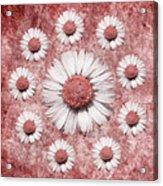 La Ronde Des Marguerites - Pink 02 Acrylic Print