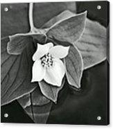 La Vie En Noir Et Blanc Acrylic Print