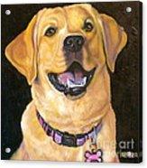 Lab Adorable Acrylic Print by Susan A Becker