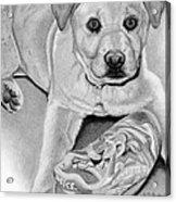 Sneaker Snatcher- Labrador And Chow Chowx Mix Acrylic Print