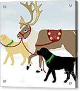 Labrador Dogs Lead Reindeer Acrylic Print
