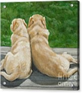 Labrador Lazy Afternoon Acrylic Print