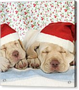 Labrador Puppy Dogs Wearing Christmas Acrylic Print