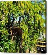 Laburnum By The River Acrylic Print