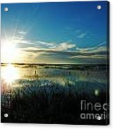 Lacassine Afternoon Sparkle Acrylic Print