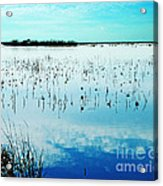 Lacassine Nwr Blue Pool Acrylic Print