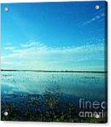 Lacassine Nwr Pool Blue And Green Acrylic Print