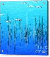 Lacassine Pool Reeds Acrylic Print
