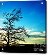 Lacassine Tree Acrylic Print