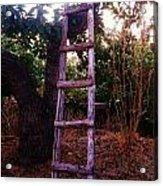 Ladder Acrylic Print by Jamil Alkhoury