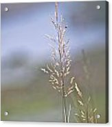 Lades View Meadow Acrylic Print