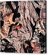 Lady Bug In Spring Acrylic Print
