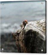 Lady Bug Lake Acrylic Print