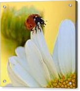 lady Bug Acrylic Print by Scott Gould