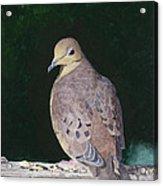 Lady Dove Acrylic Print