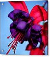Lady Eardrops I Acrylic Print
