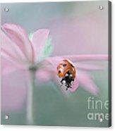 Lady In Pink Acrylic Print by Jacky Parker