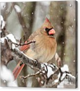 Lady In The Snow Acrylic Print