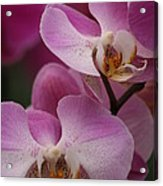 Lady Pink Orchid Acrylic Print by Valia Bradshaw