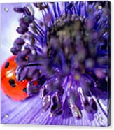Ladybird Having A Snooze Acrylic Print