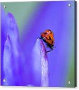 Ladybug Adventure Acrylic Print