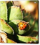 Ladybug And Chick Acrylic Print