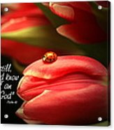 Ladybug And Tulip Acrylic Print by Linda Fowler