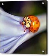 Ladybug Art Acrylic Print by Tammy Smith