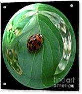 Ladybug Eating Aphids Acrylic Print