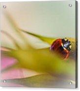 Ladybug II Acrylic Print