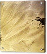 Ladybug On A Sunflower Acrylic Print