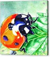 Ladybug On The Leaf Acrylic Print