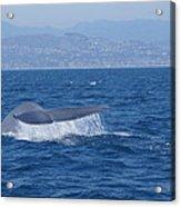 Laguna Whale Acrylic Print
