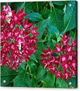 Lahaina Flowers 1 Acrylic Print